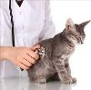 Ветеринарные клиники в Елизово